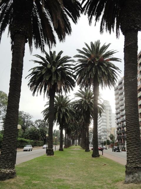 Montevideo gezi