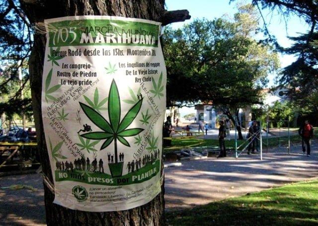 Montevideo marijuana uruguay esrar