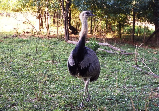 Jardin Botanico y zoologico de asuncion Paraguay
