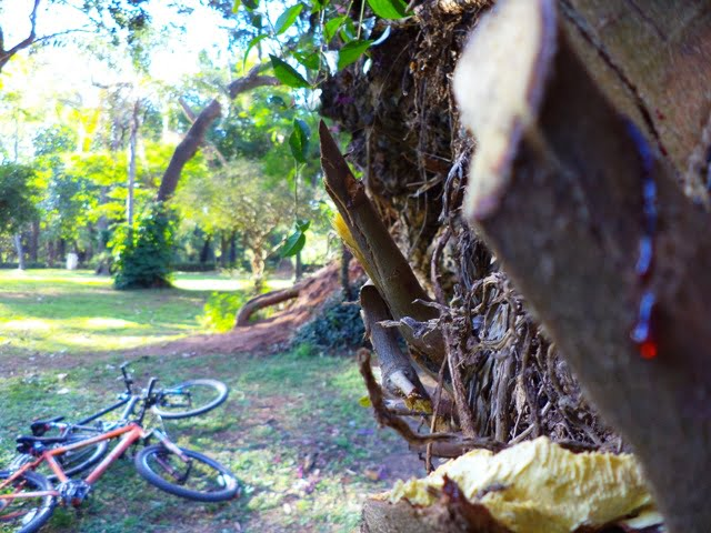 Jardin Botanico Asuncion Paraguay