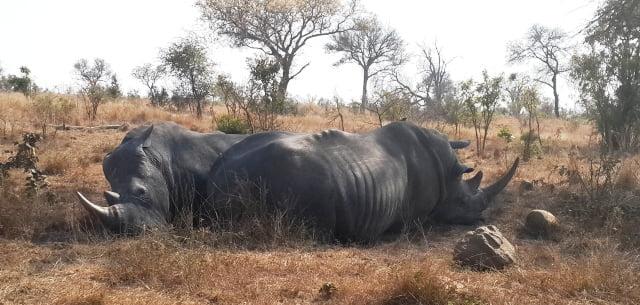 Afrika gergedan