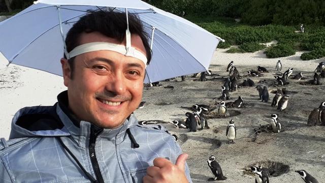 Afrika pengueni