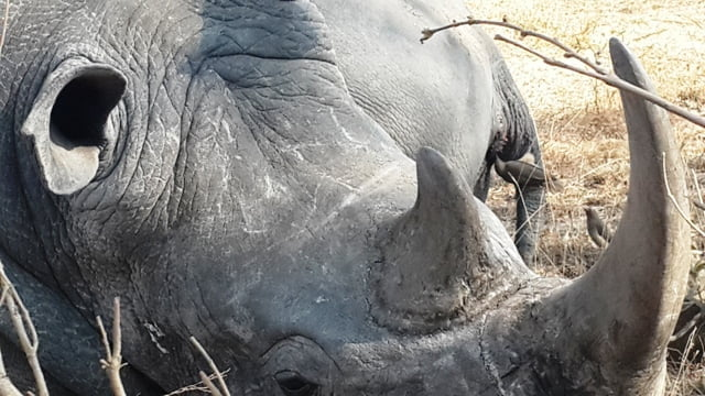 Afrika vahşi hayvan