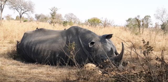 Afrika vahşi hayat