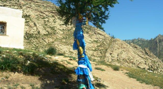 ağaca bez bağla