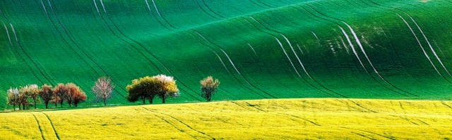 Dünyanın en güzel toprağı