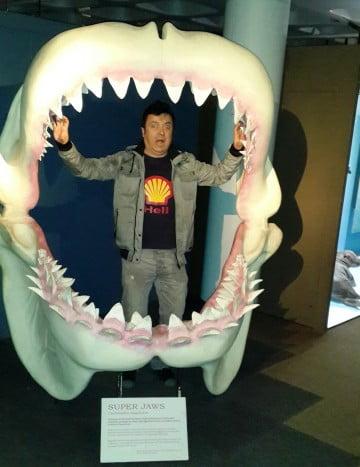 köpek balığı insan yemek