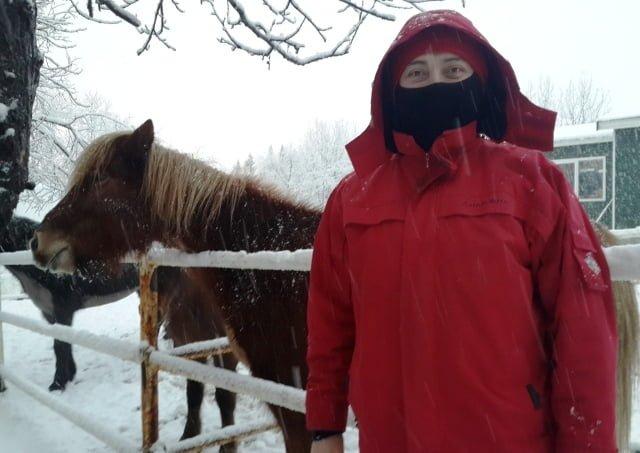 İzlanda atlar