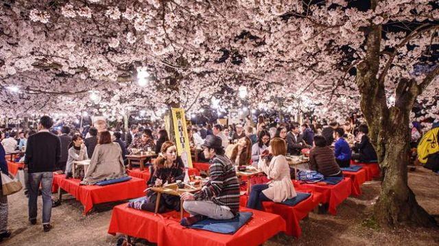 Japon bahçesi ve çiçekleri