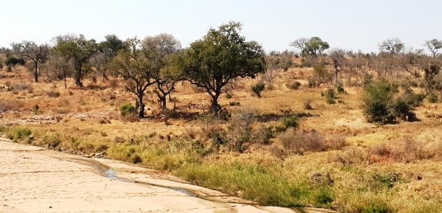 kruger national park game reserve