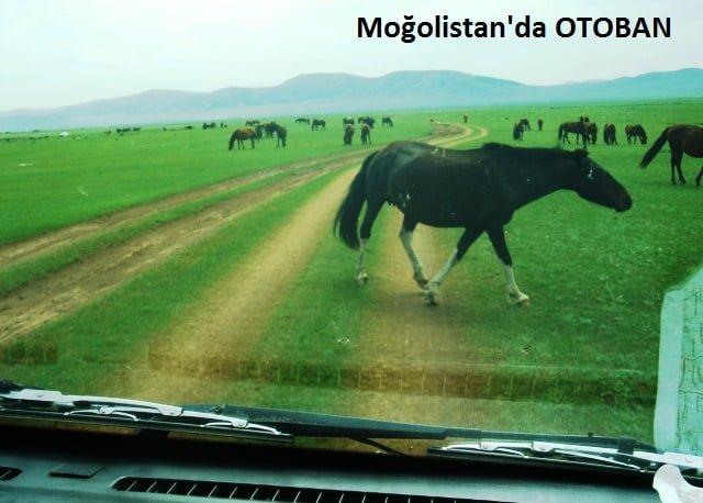 moğolistan yolları resimleri