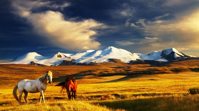 Moğolistan gezi notları